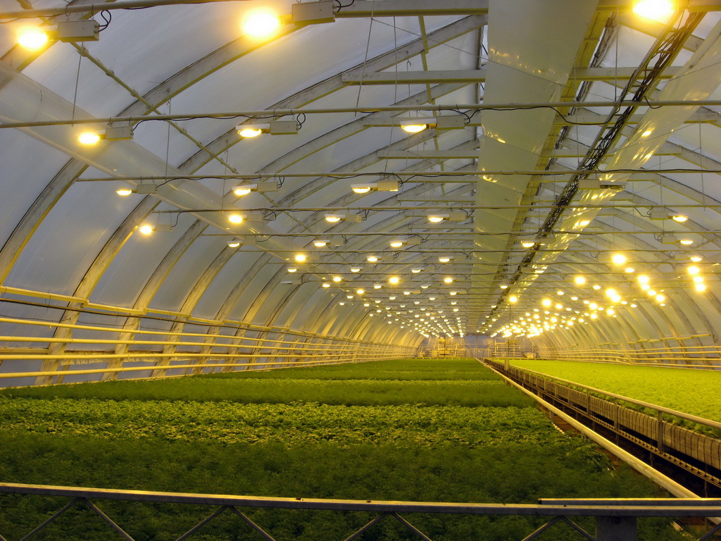 Правильное освещение растений 1