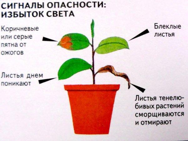 Правильное освещение растений 2